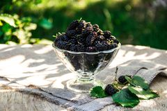 Mulberry in a glass on table. Useful berries in the summer season. Summer berries stock photos