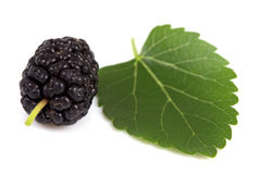Mulberry and green leaf Royalty Free Stock Photo