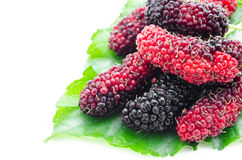 Mulberry with green leaf. Stock Images