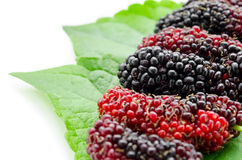 Mulberry with green leaf. Stock Image