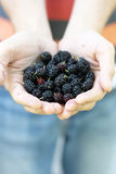 Mulberry in the hands Stock Images