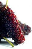 Mulberry Imagem de Stock Royalty Free