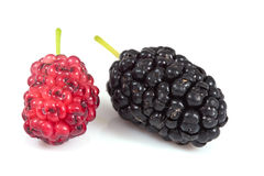 Mulberry on isolated Stock Images