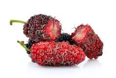 Mulberry isolated on white background Stock Image