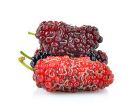 Mulberry isolated on white background Royalty Free Stock Photo