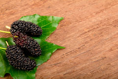 Mulberry and leaf. Stock Images