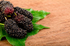 Mulberry and leaf. Royalty Free Stock Photography