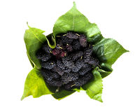 Mulberry with leaf. Royalty Free Stock Photography