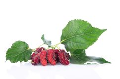 Mulberry with leaf stock images