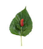 Mulberry and leaf Royalty Free Stock Photo