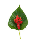 Mulberry and leaf Stock Photos