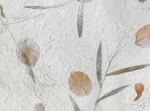 Mulberry paper. Stock Image