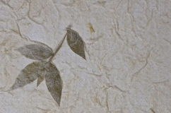 Mulberry paper texture background with leaf Stock Image