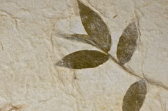 Mulberry paper texture background with leaf Royalty Free Stock Photos
