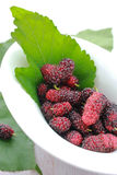 Mulberry Stock Photo