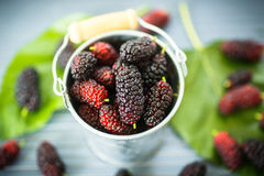Mulberry Royalty Free Stock Image
