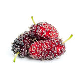 Mulberry. Sweet mulberry isolated on white background stock images