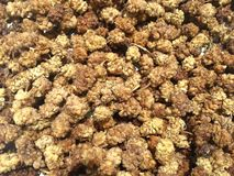 Mulberry. A texture of dried mulberries royalty free stock photo