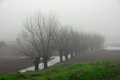 Mulberry trees amidst the fog in Italian plain Stock Images