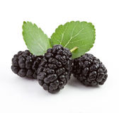 Mulberry on a white background. Fresh mulberry on a white background with leaves royalty free stock photos