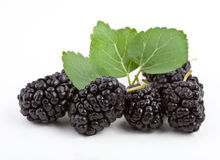 Mulberry on a white background Royalty Free Stock Photos