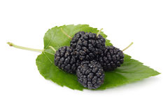 Mulberry Stock Photography