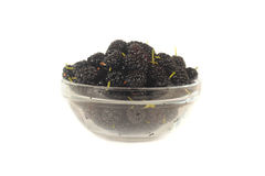 Mulberry Royalty Free Stock Photo