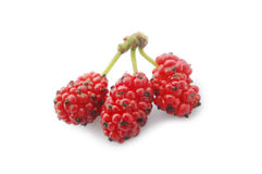 Mulberry on white ground Royalty Free Stock Photo