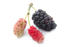 Mulberry on white ground Royalty Free Stock Photos