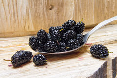 Mulberry. Wild, home berries. royalty free stock photo