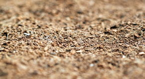 Mulch. Close up of brown mulch good for use as a background Royalty Free Stock Image