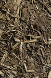 Mulch. Brown mulch on the ground royalty free stock photos