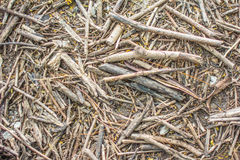 Mulch for background Royalty Free Stock Images