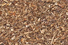 Mulch bark seamless texture Stock Image