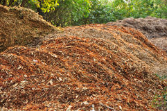 Mulch in garden Stock Images
