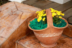 Mulch Green Decorative Bark. Being arranged on the soil under the flowers in a vase Royalty Free Stock Image