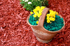 Mulch Green Decorative Bark. Being arranged on the soil under the flowers in a vase Stock Photos