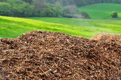Mulch nature biomass Royalty Free Stock Photos