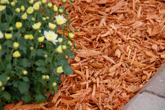 Mulch Orange Coloured Decorative Bark. Garden decoration on the soil texture photography Royalty Free Stock Photography