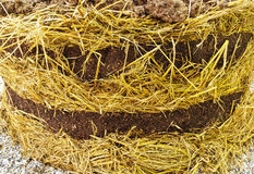 Mulch orgânico rico Foto de Stock Royalty Free