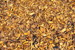 Mulch Pile Royalty Free Stock Photography