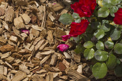 Mulch (pine bark) for bedding roses and plants. Mulch for bedding roses and plants. Gardening Stock Photography