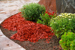 Mulch Red Decorative Bark. Being arranged on the soil under the flowers Stock Image