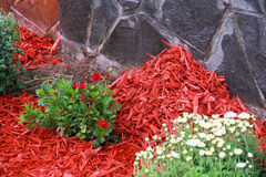 Mulch Red Decorative Bark. Being arranged on the soil under the flowers Royalty Free Stock Photo