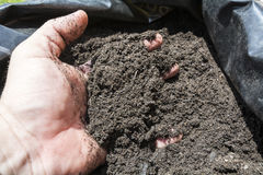 Mulch in a sack for the orchard, garden or field Stock Image