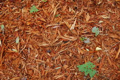 Mulch sawdust. Wooden sawdust around fields in the Netherlands with small green plantlet Stock Photo