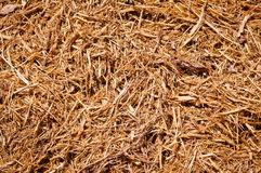Mulch Wood chips. Background of mulch wood chips Royalty Free Stock Photos