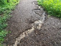 Mulch or wood chips on a path with water erosion Stock Photo