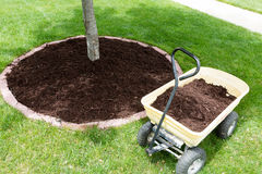 Mulch work around the trees Stock Photography