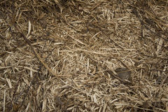 Mulched wood stock image